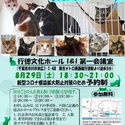 8/29(土曜)イコール保護猫譲渡会