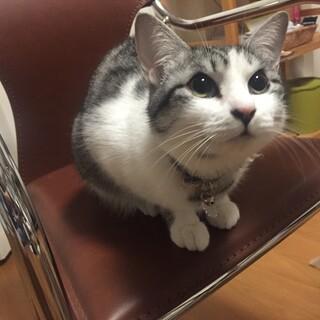 人懐っこい猫推定2、3歳