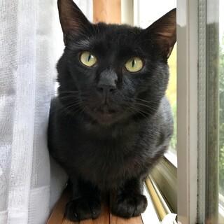 真っ黒毛で尻尾真っ直ぐなハンサム黒くん