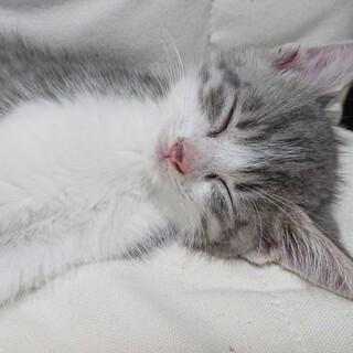 とても甘えん坊な赤ちゃん仔猫くん(6月1日生まれ)