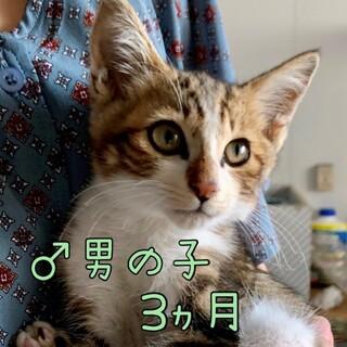 元気な男の子「ひのきまる」★オス★生後3ヵ月