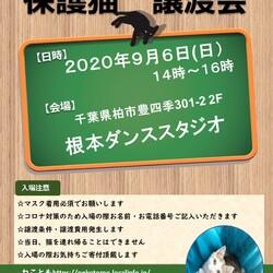 9/6(日)猫カフェ風保護猫譲渡会
