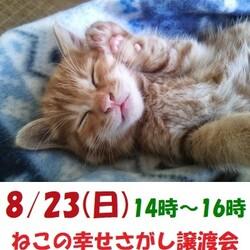 子猫も沢山参加「ねこの幸せさがし」譲渡会
