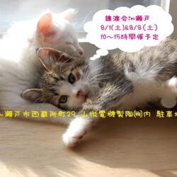 猫の譲渡会 ちーむ にゃいんず IN 瀬戸