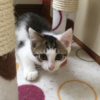 可愛いノラ猫☆マリンくん♂2ヶ月