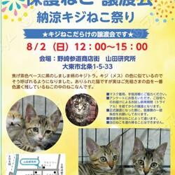 【野崎参道商店街】臨時キジ猫だけの里親会