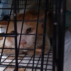 保護した子猫達がいた地域をまたTNR。