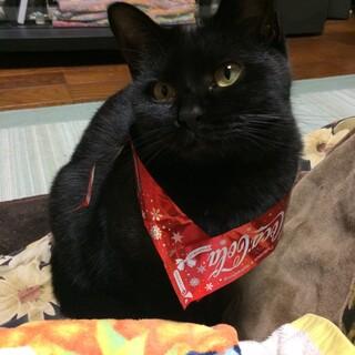 黒猫の美人猫さん☀︎