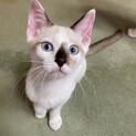 アイスブルーの瞳が魅力的なするめです
