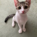 小顔美猫のもんにゃのです