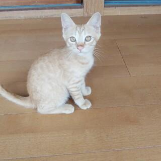 熊本県荒尾市【里親募集】かわいい子猫です。
