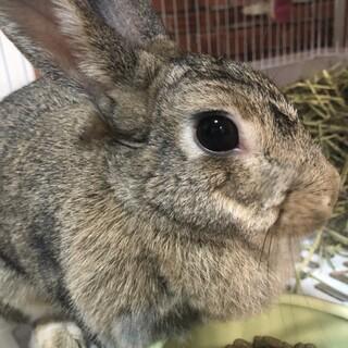 ミニウサギのロイちゃん