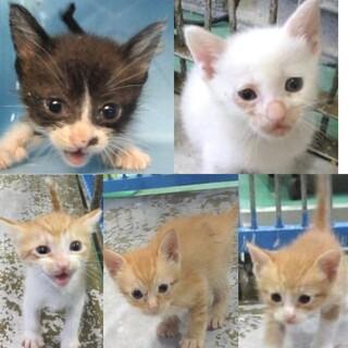 5匹の幼過ぎる子猫たち