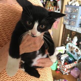 可愛いソックス猫2ヶ月