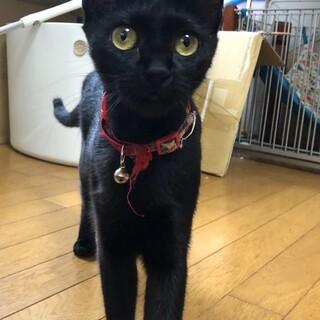 黒猫ジジそっくり!長い尻尾が特徴です