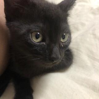 【黒猫】子猫3ヶ月!可愛い性格です