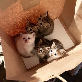 小さくて元気な5匹の子猫 1匹だけでも可