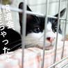 【8/2東日本橋】超絶元気で楽しい!♡ルークくん サムネイル3