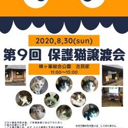 第9回保護猫譲渡会in山口県