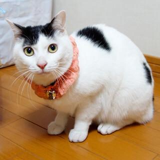 【8/2東日本橋】家族になってね♡ふぁーちゃん