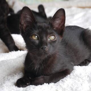 とってもなつこい黒子猫