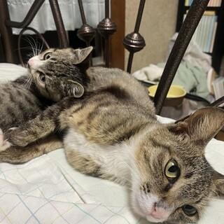 かわいい子猫と仔猫の母子(保護ねこ)