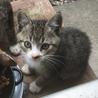 かわいい子猫と仔猫の母子(保護ねこ) サムネイル4