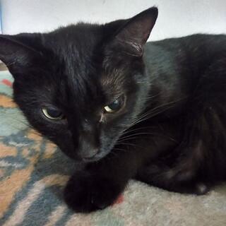 (急募集) 8歳になるトイプードルと黒猫2歳♀