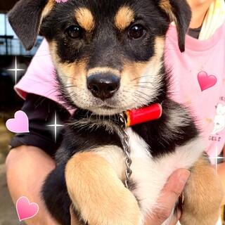 20-W517 可愛い子犬