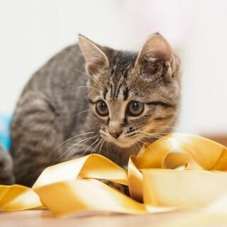 岩手の北上市です。子猫です。お近くの方よろしく。