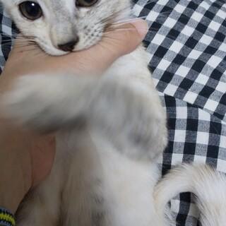 生後3ヶ月の子猫 ザイ