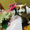 優しい、三毛猫の美人猫さん☀︎