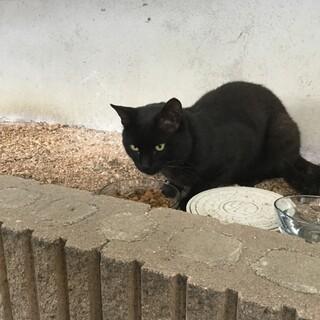 とても賢い黒猫ちゃん