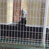 とても賢い黒猫ちゃん サムネイル5