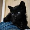 【募集一旦停止】魅惑の漆黒美猫ちゃん サムネイル2