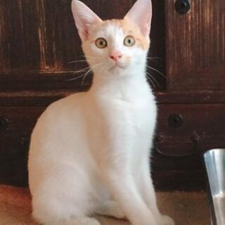 三度の飯より人が好き★茶白のオカッパ猫