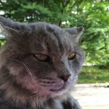 2年間野良で放浪した後はエリアに君臨するボス猫の貫禄