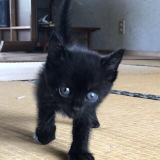 1ヶ月くらいの真っ黒子猫
