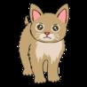 RINN猫