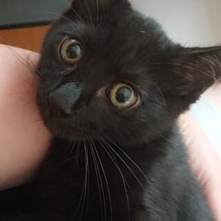 4月生まれ優しい性格の黒猫の男の子