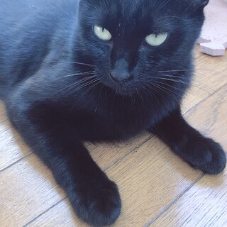 くせになる三白眼の黒猫ちゃんです。