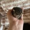 可愛い赤ちゃん(残りキジトラ猫一匹)