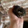可愛い赤ちゃん(残りキジトラ猫一匹) サムネイル2