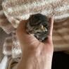 可愛い赤ちゃん(残りキジトラ猫一匹) サムネイル3