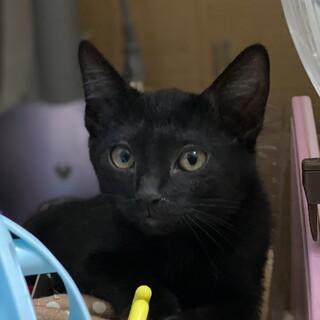 元気な黒猫男子!