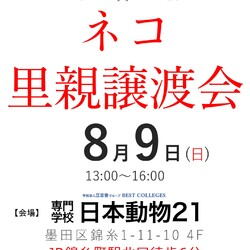 錦糸町でネコの里親譲渡会(12:30〜受付開始)
