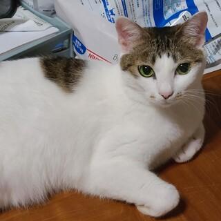 スリスリ甘えん坊の美人猫