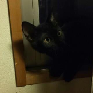 野良猫の赤ちゃん2