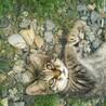 子猫の里親待ってます!