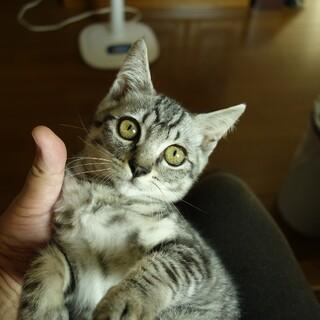 保護仔猫の里親様募集3